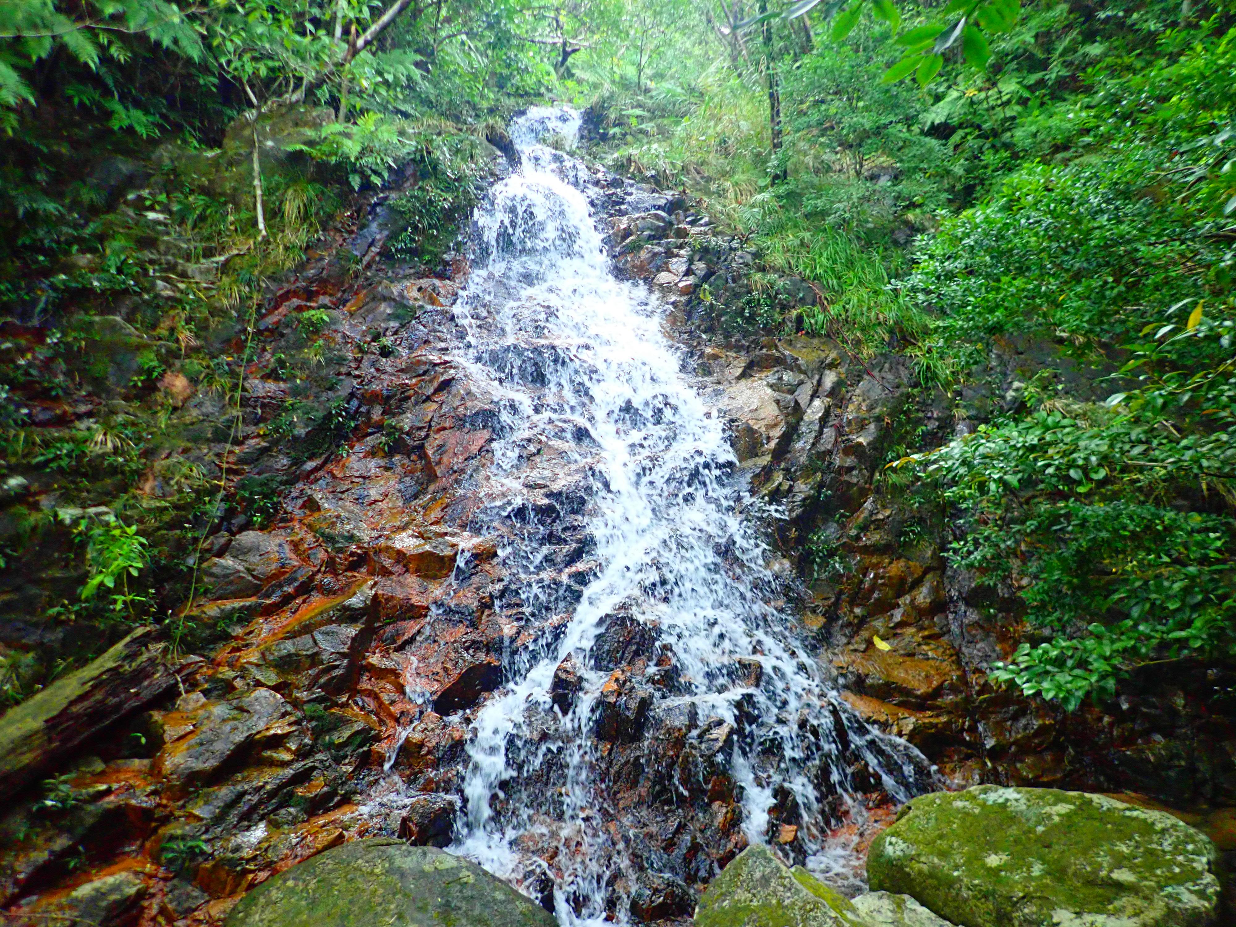 於茂登岳ジャングルの水流