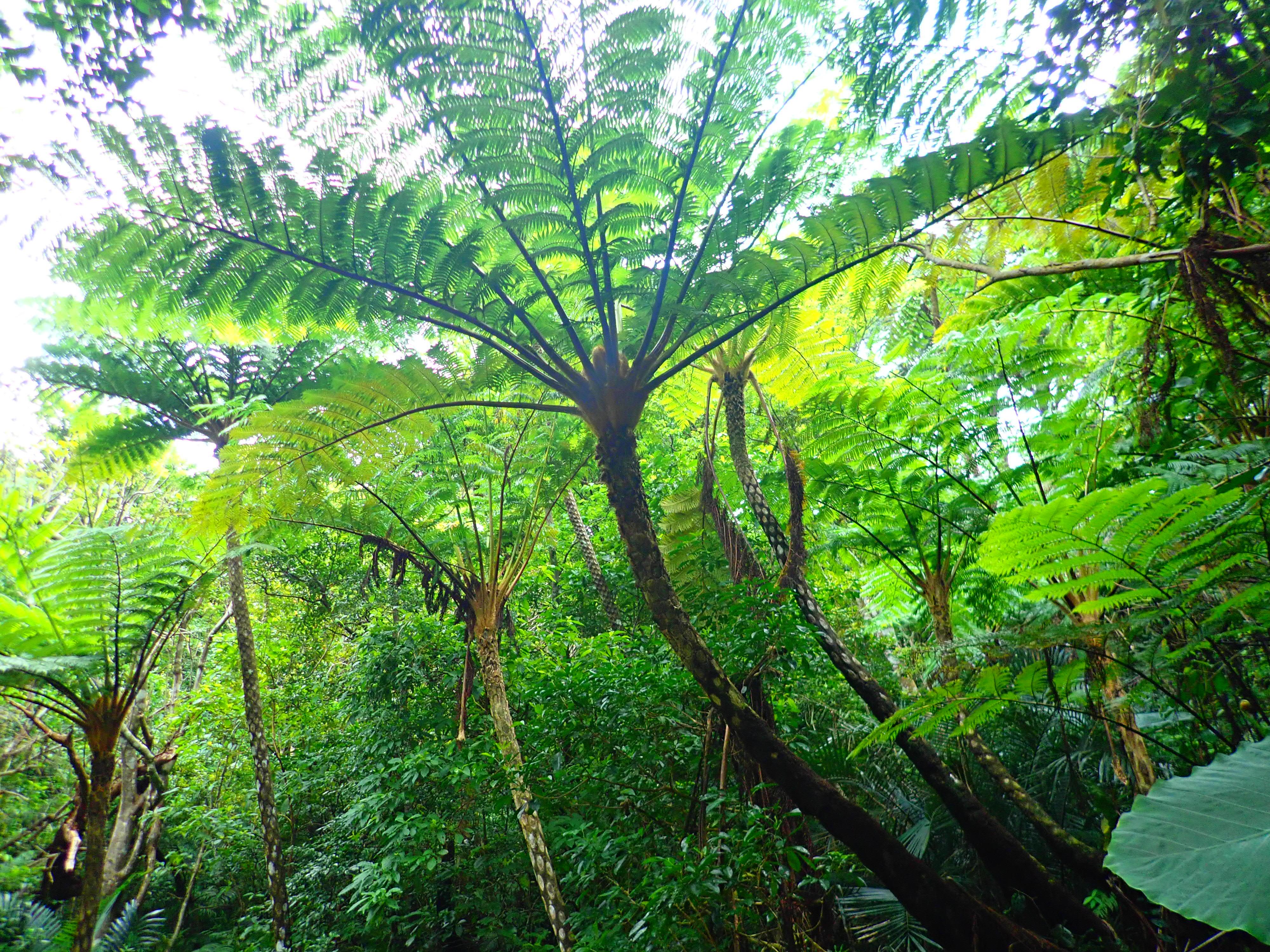オモトダケに自生している亜熱帯植物