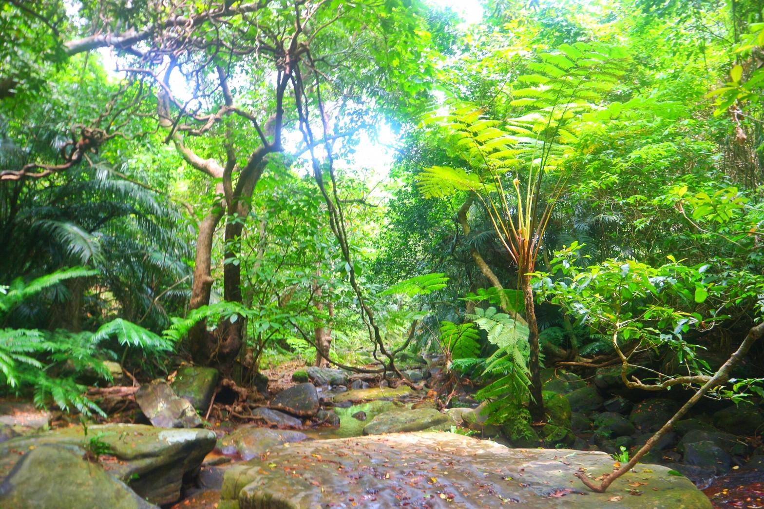 石垣島から日帰りで行くクーラの滝トレッキングツアー