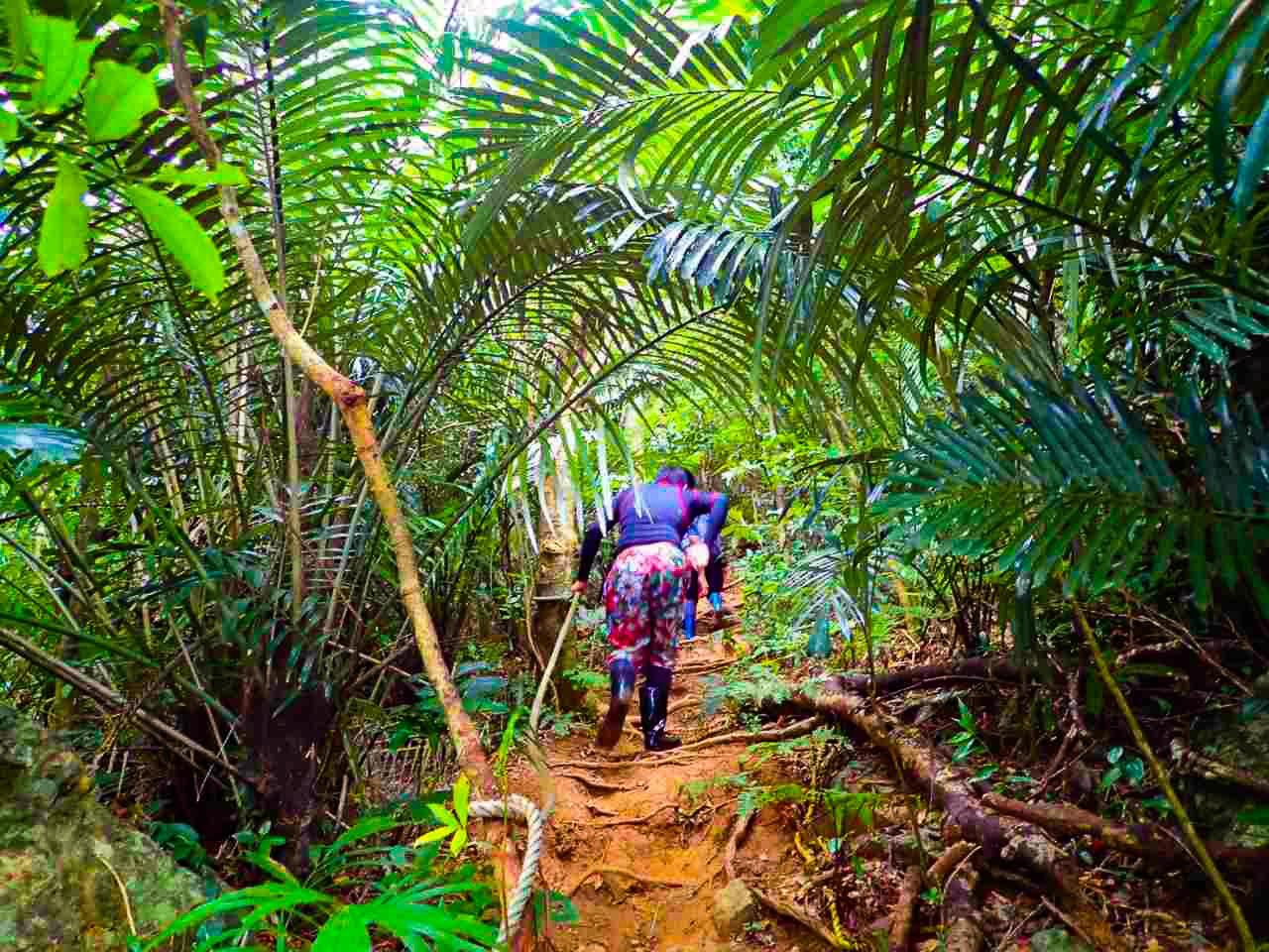 社員旅行でのトレッキング途中の亜熱帯原生林