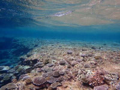青の洞窟シュノーケリング、珊瑚