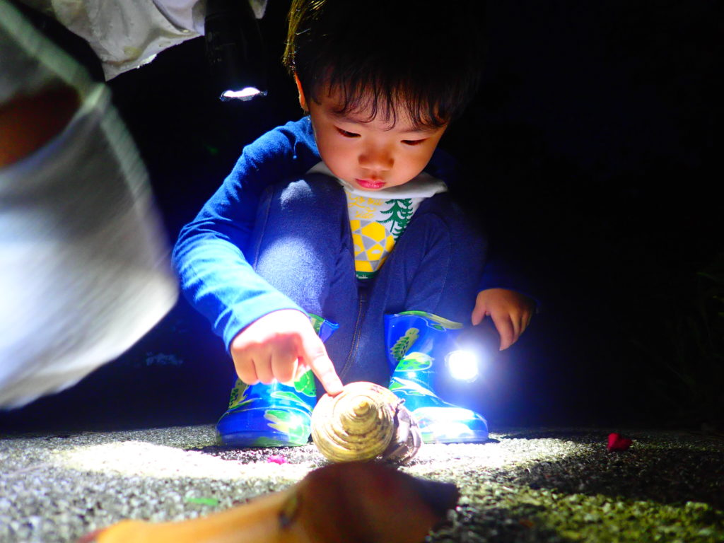 石垣島ナイトツアー