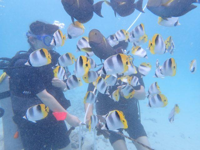 ダイビング中にチョウチョウウオの群れに囲まれる