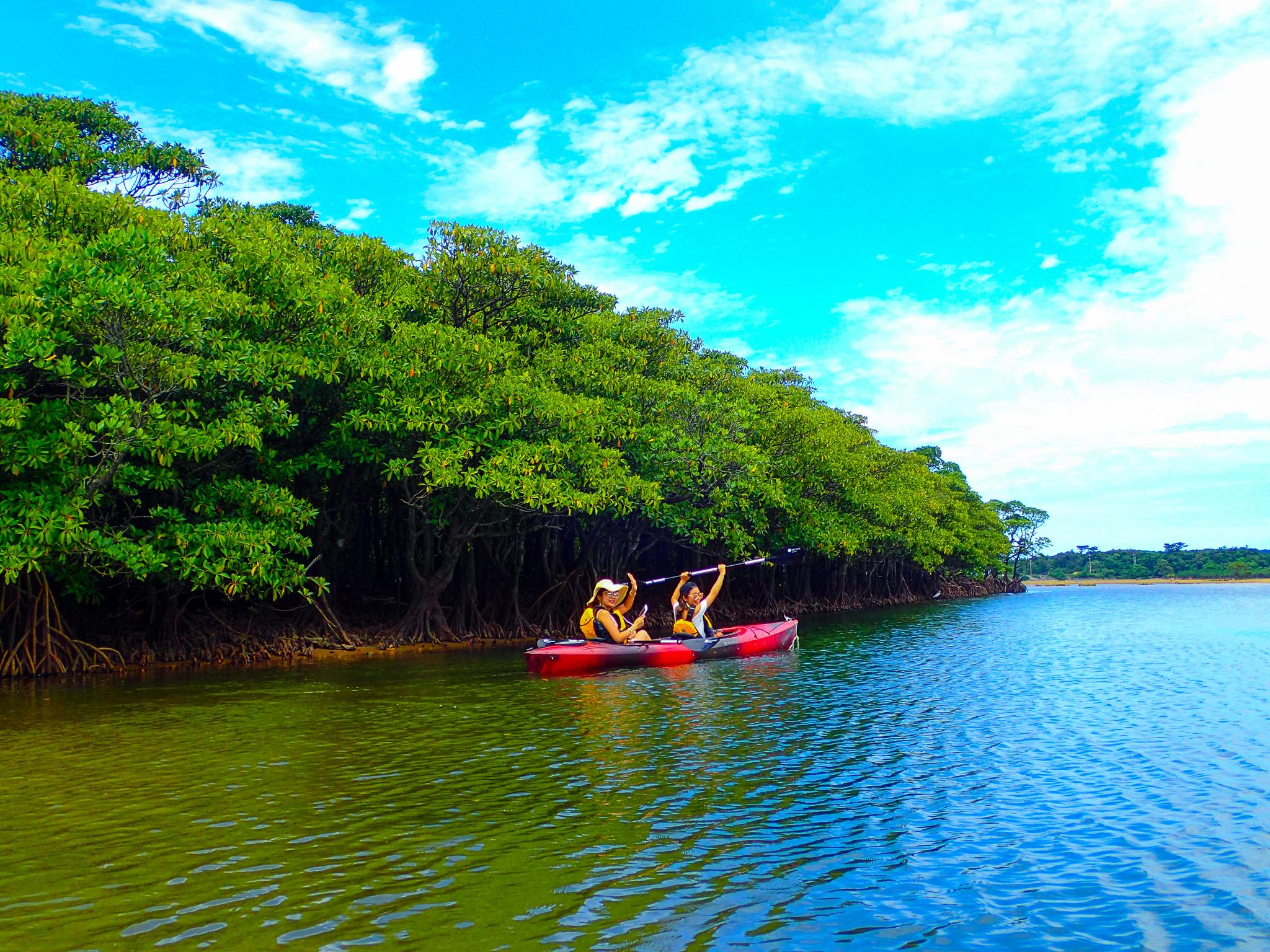 石垣島で一番大きなマングローブ林をカヌーで楽しむ