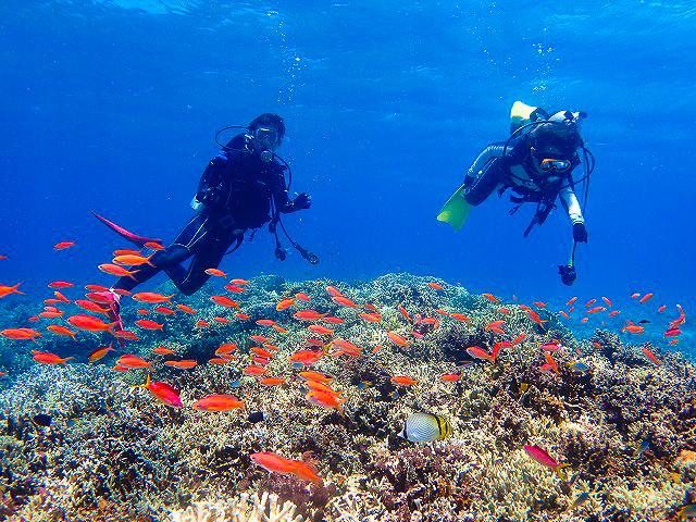 熱帯魚と一緒に体験ダイビングで泳ぐ