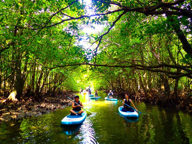 世界自然登録候補地をクルーズする西表島秘境SUP