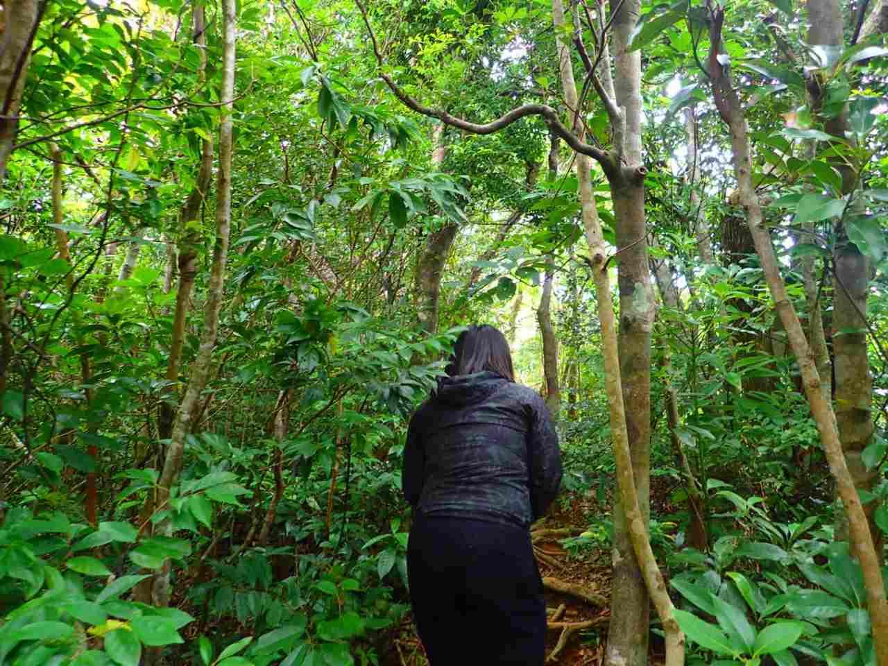 野底岳の亜熱帯ジャングルを散策