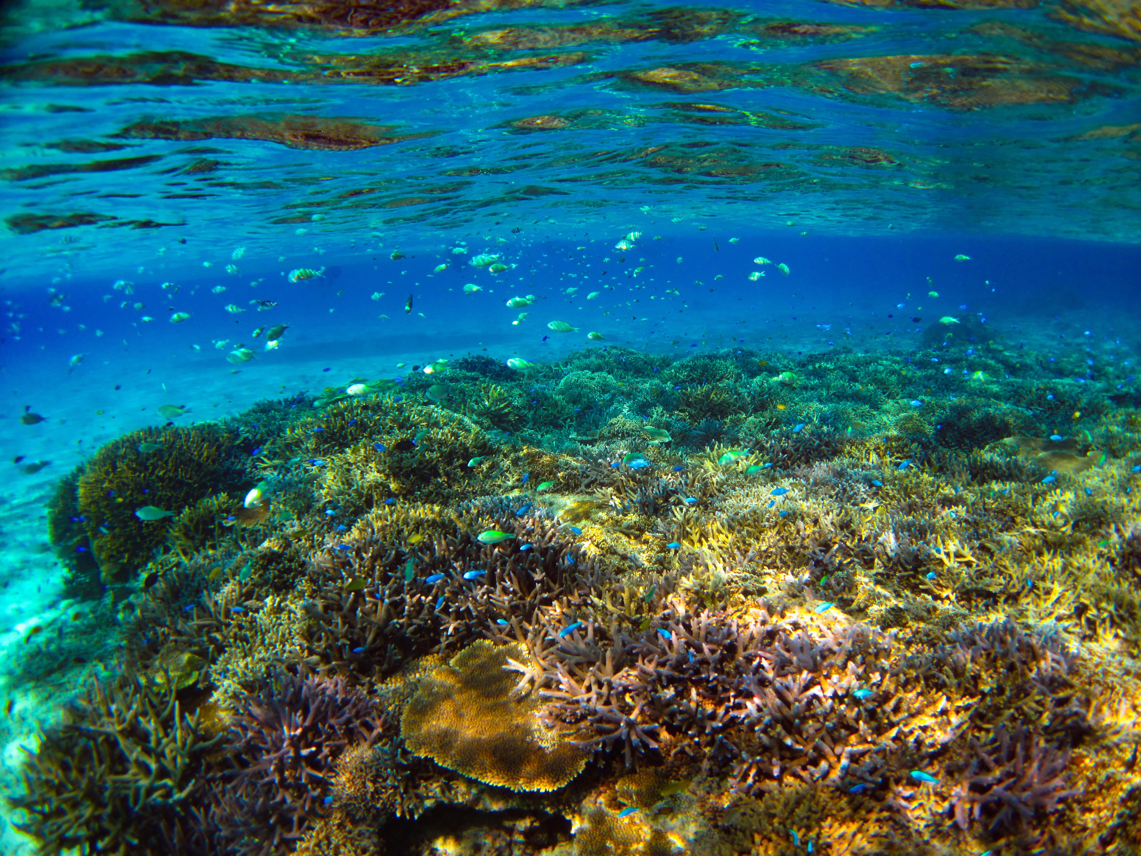 幻の島周辺の海ではサンゴと熱帯魚とのシュノーケルを体験