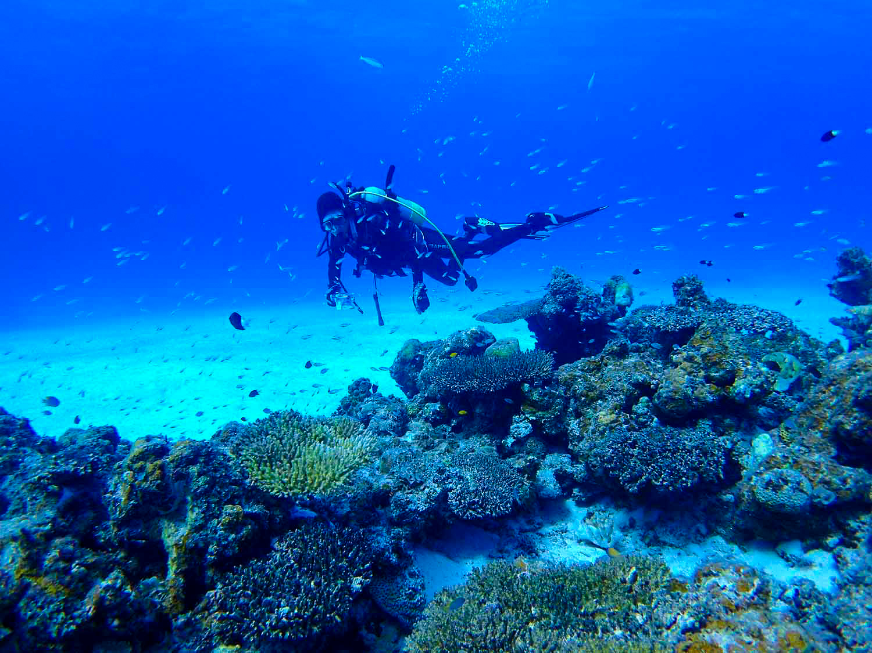 石垣島の体験ダイビングを旅行中に体験