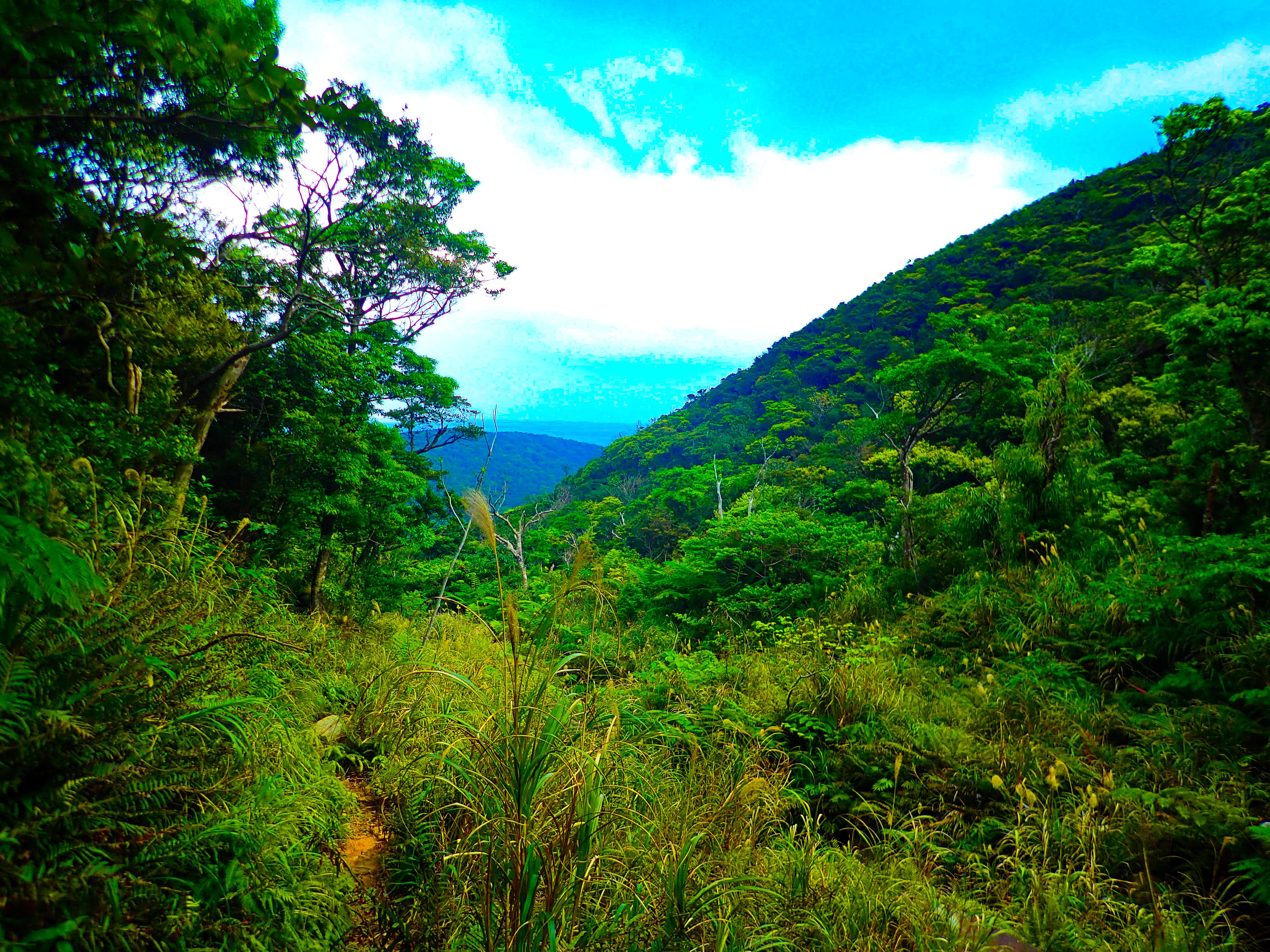 於茂登岳の風景