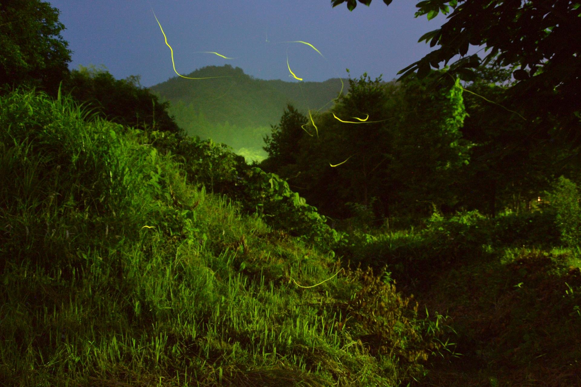 夜の石垣島おすすめツアー