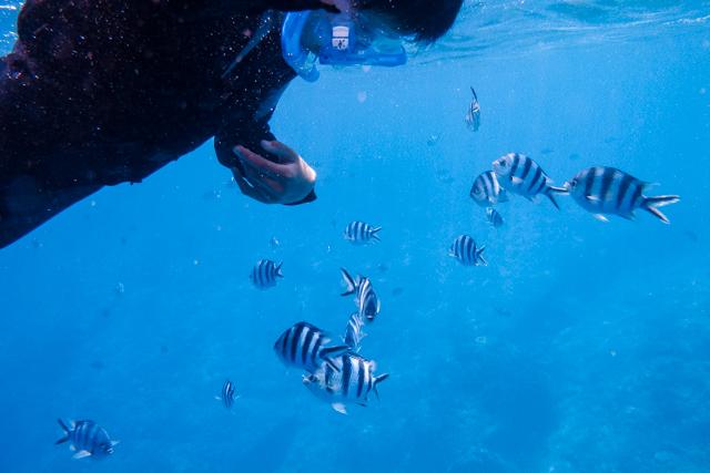 シュノーケルでお魚たちと遊ぶ