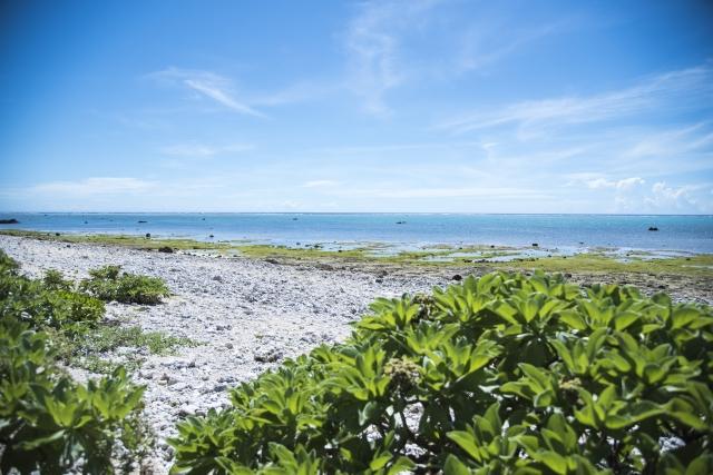 石垣島のダイビングスポット白保海岸