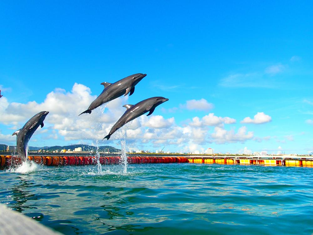 イルカが見える南ぬ浜町ビーチ