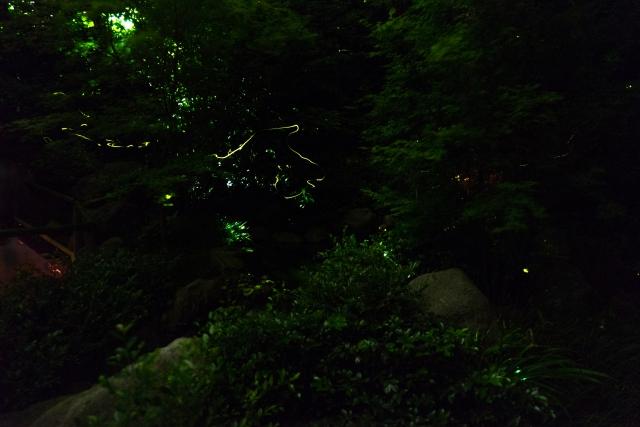 石垣島ヤエヤマヒメボタルツアー