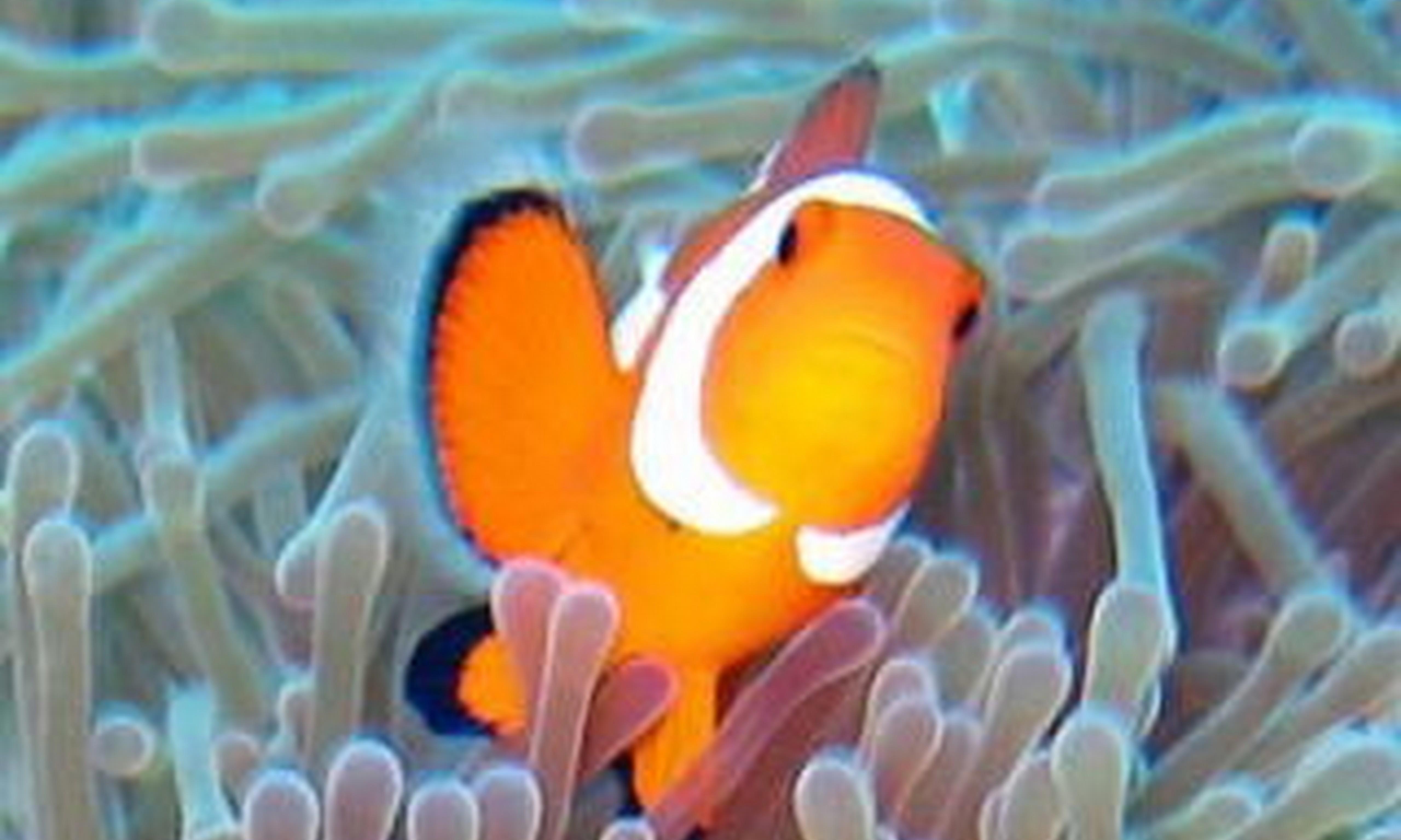 カラフルサンゴとクマノミシュノーケルセットプラン