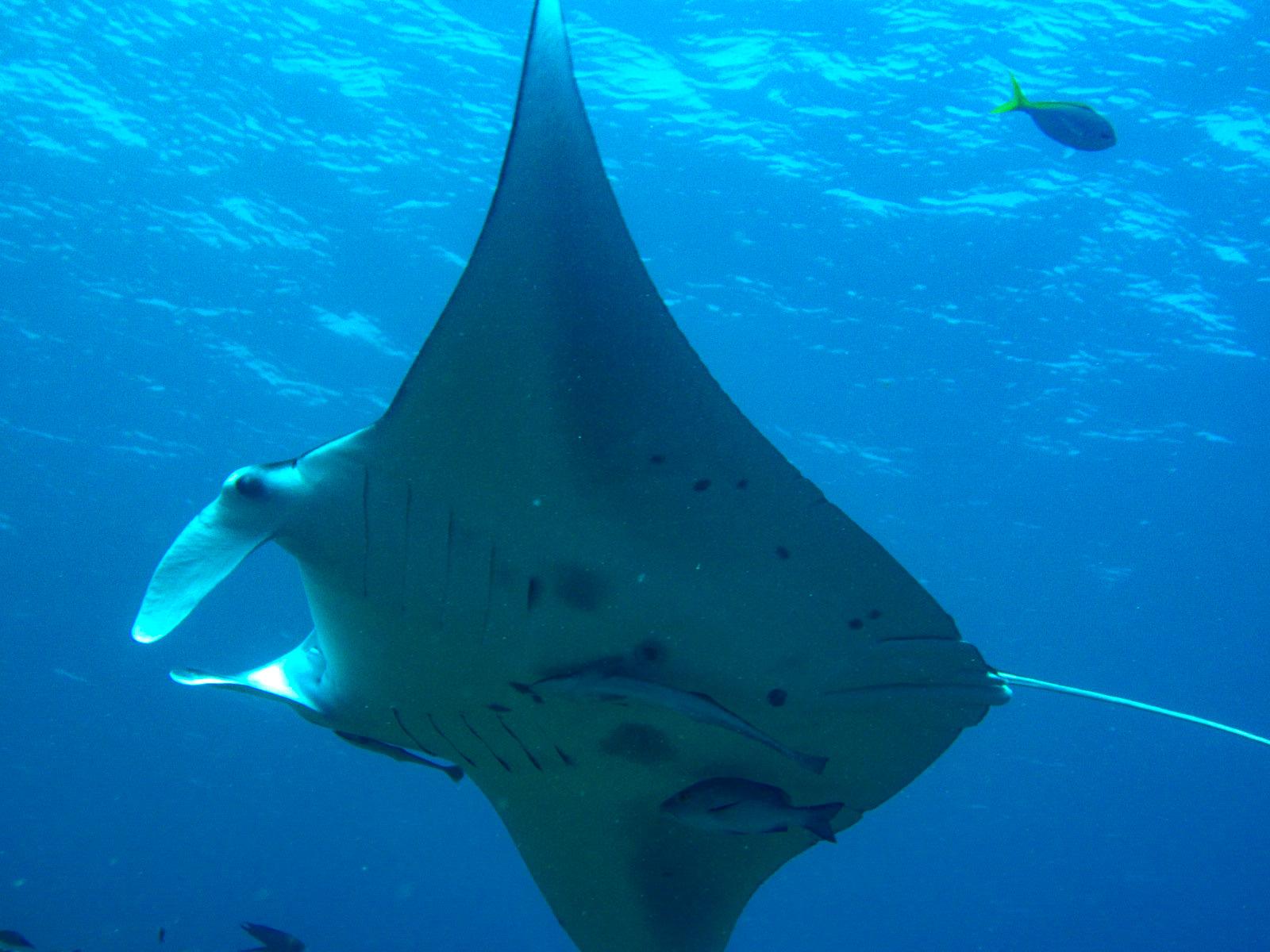 石垣島ダイビングをアドバンスド講座で水深深く潜る