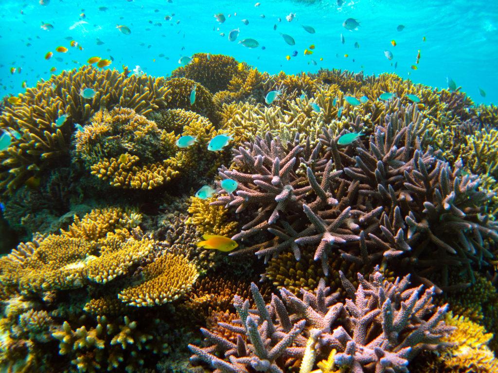 カラフルサンゴ豊かな石垣島のダイビングスポット