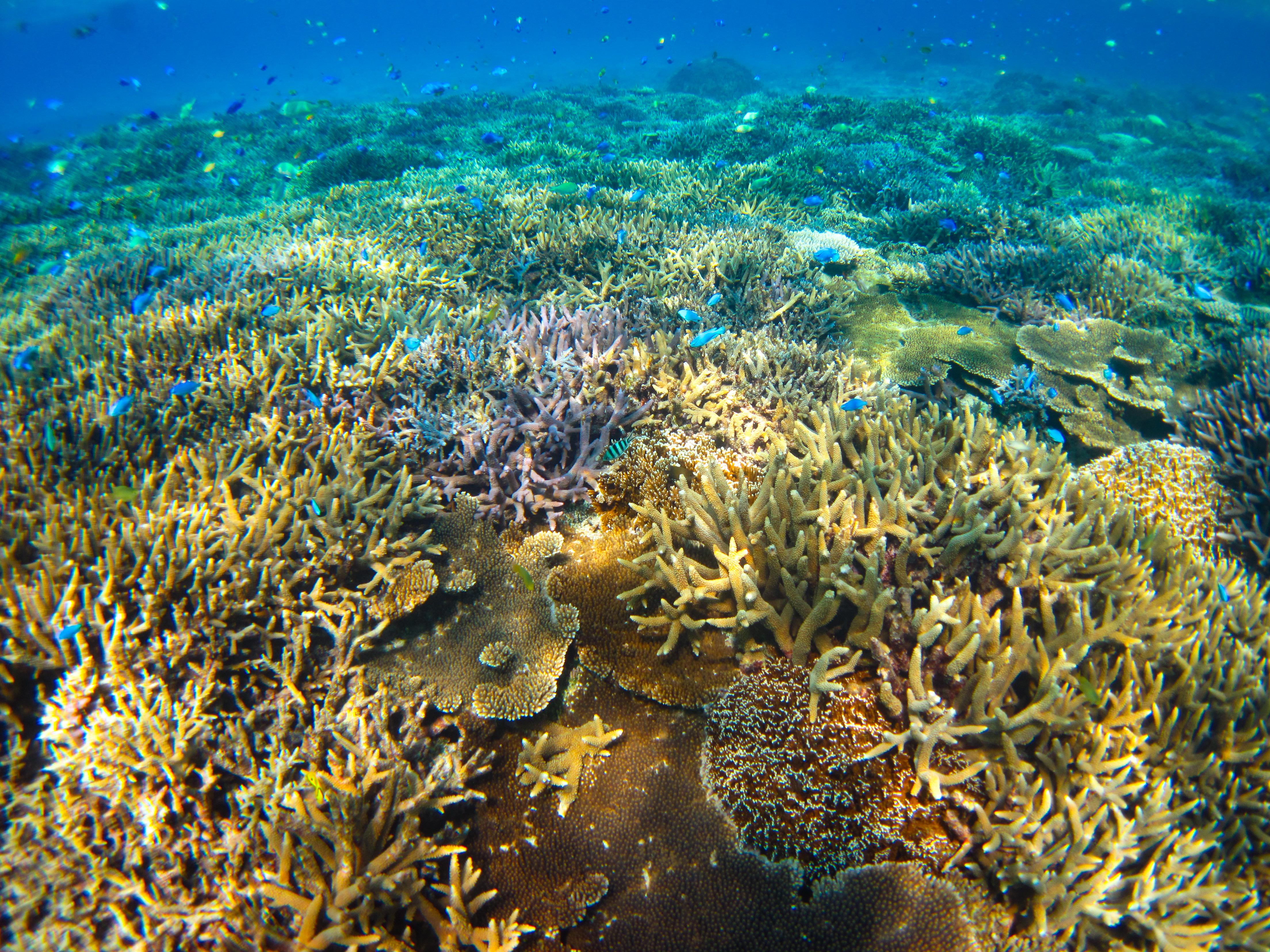 ダイビングでカラフル熱帯魚と泳ぐ