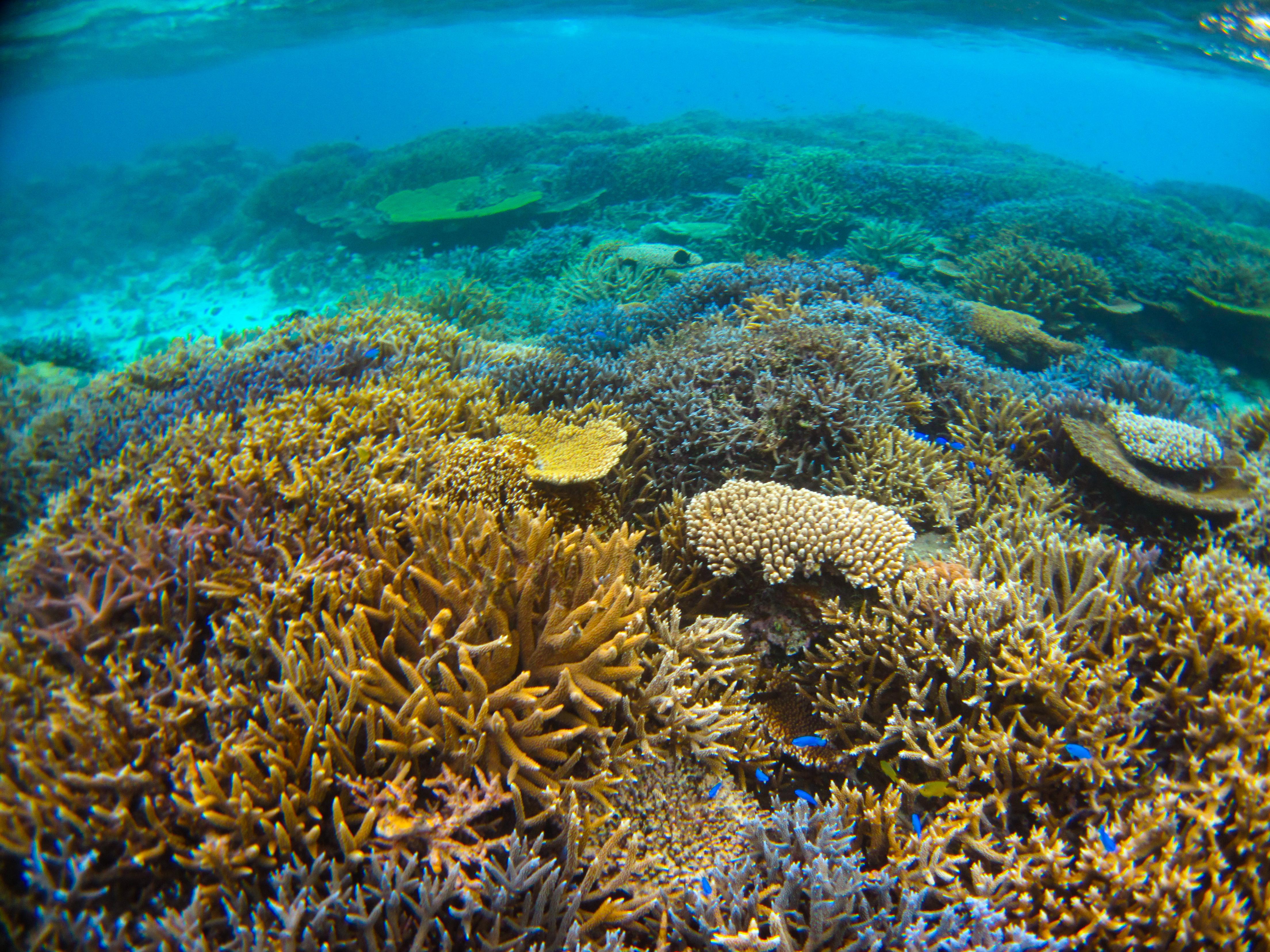 カラフルサンゴと熱帯魚