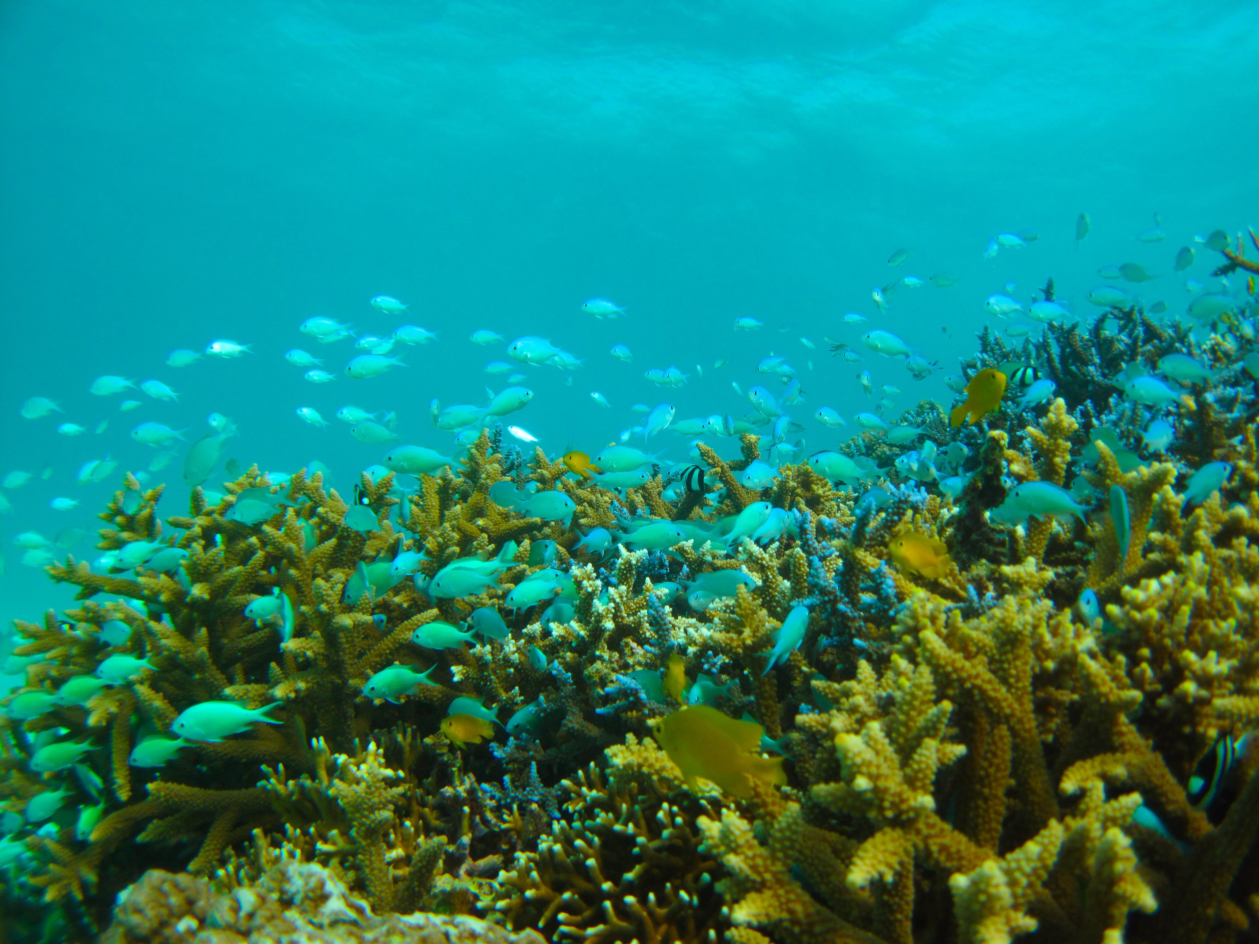 カラフルサンゴと熱帯魚の海でダイビング