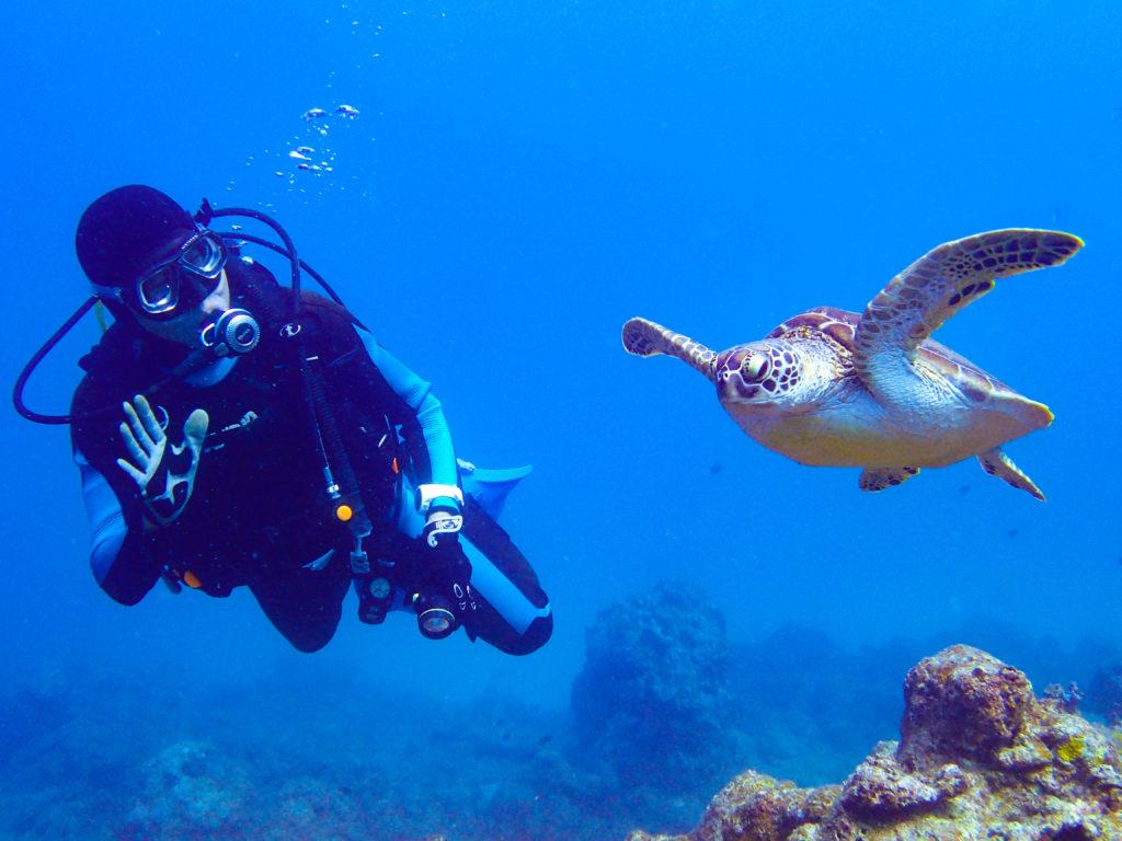 絶滅危惧種のウミガメと一緒に泳ぐ
