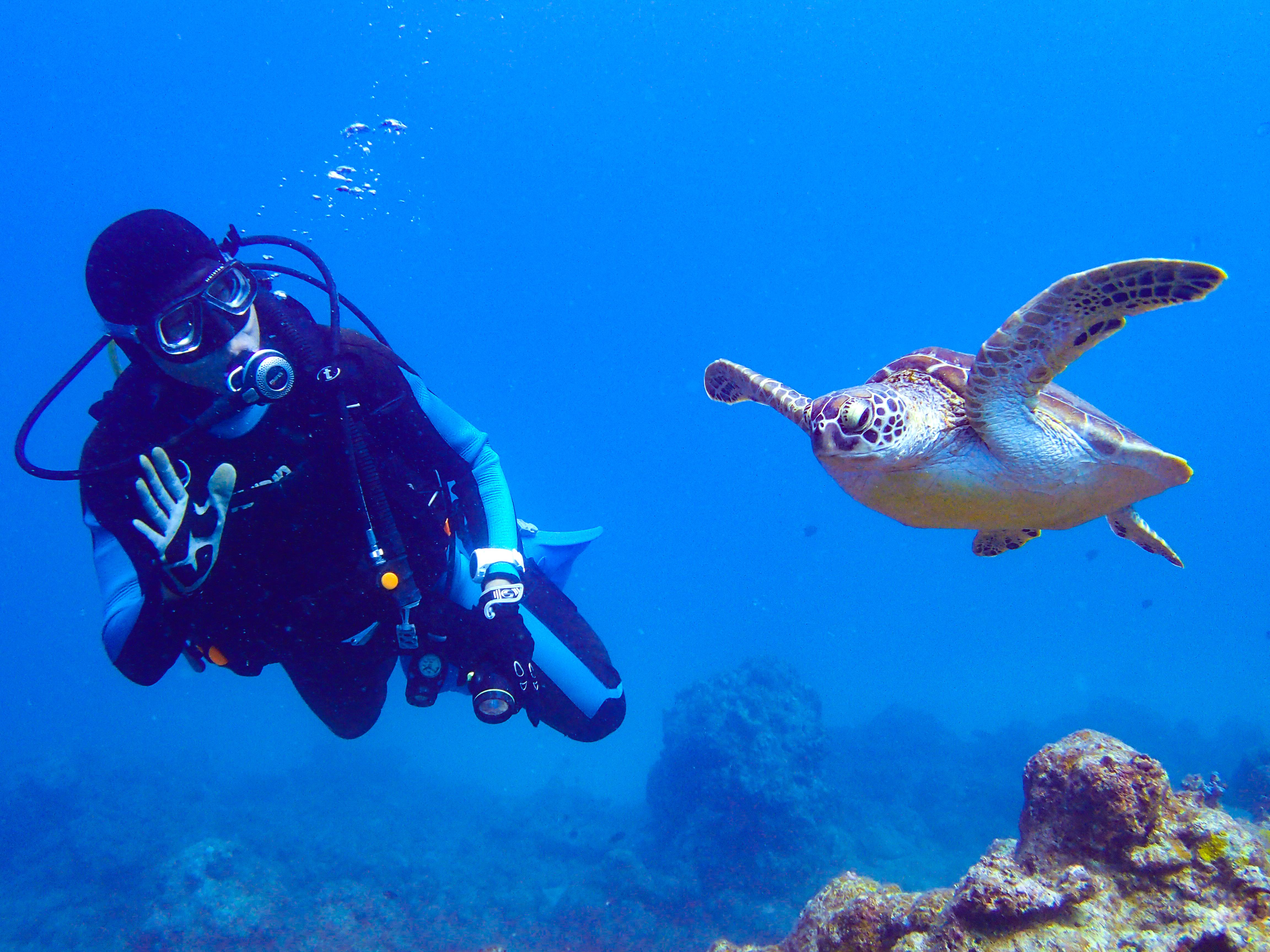 絶滅危惧種のウミガメをファンダイビングで鑑賞