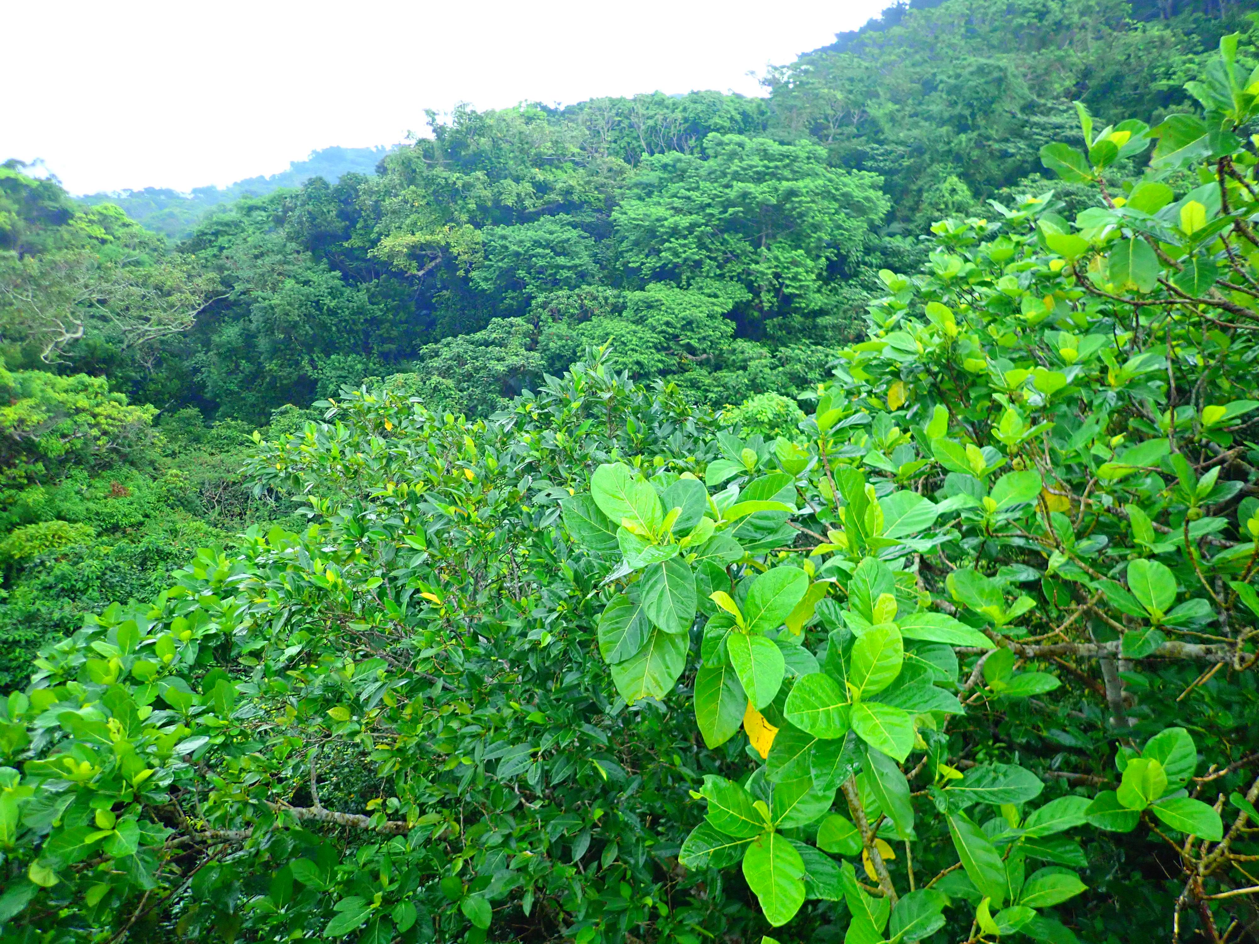 バンナ公園から見るジャングル
