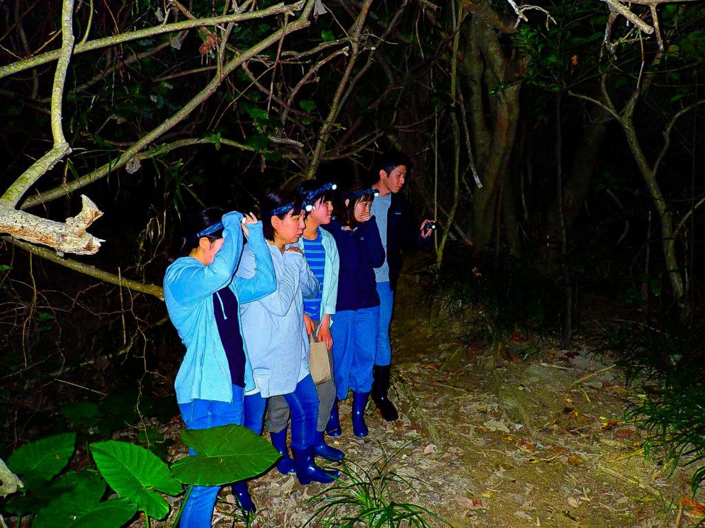 ご家族で参加するナイトサップでは夜のマングローブ林もみます