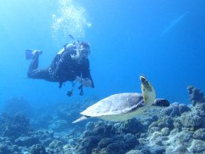 石垣島でウミガメを見ながらダイビング