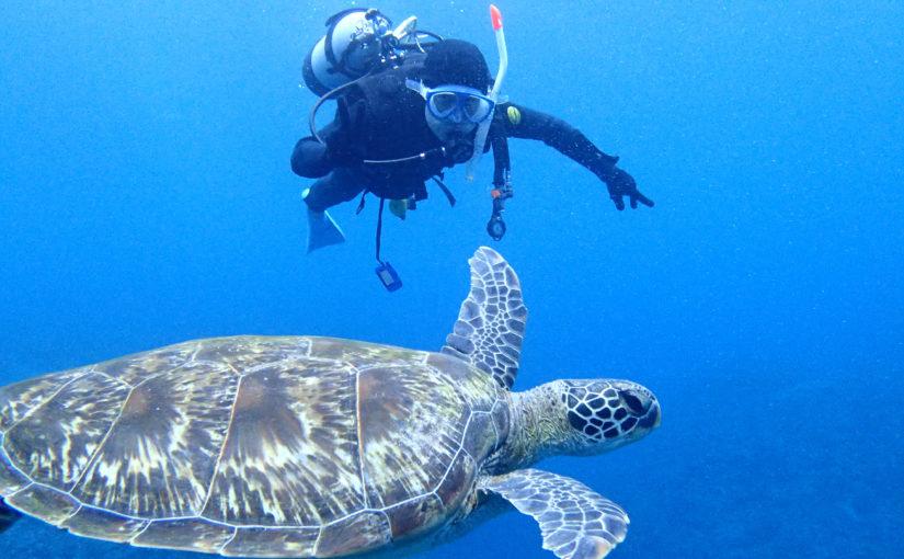 石垣島ダイビングツアーでウミガメと泳ぐ