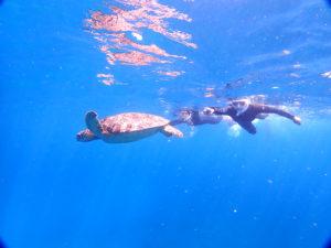 石垣島のシュノーケリングスポットでウミガメを発見