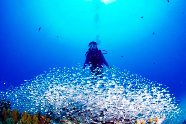 ダイビングで見られる熱帯魚の群れ