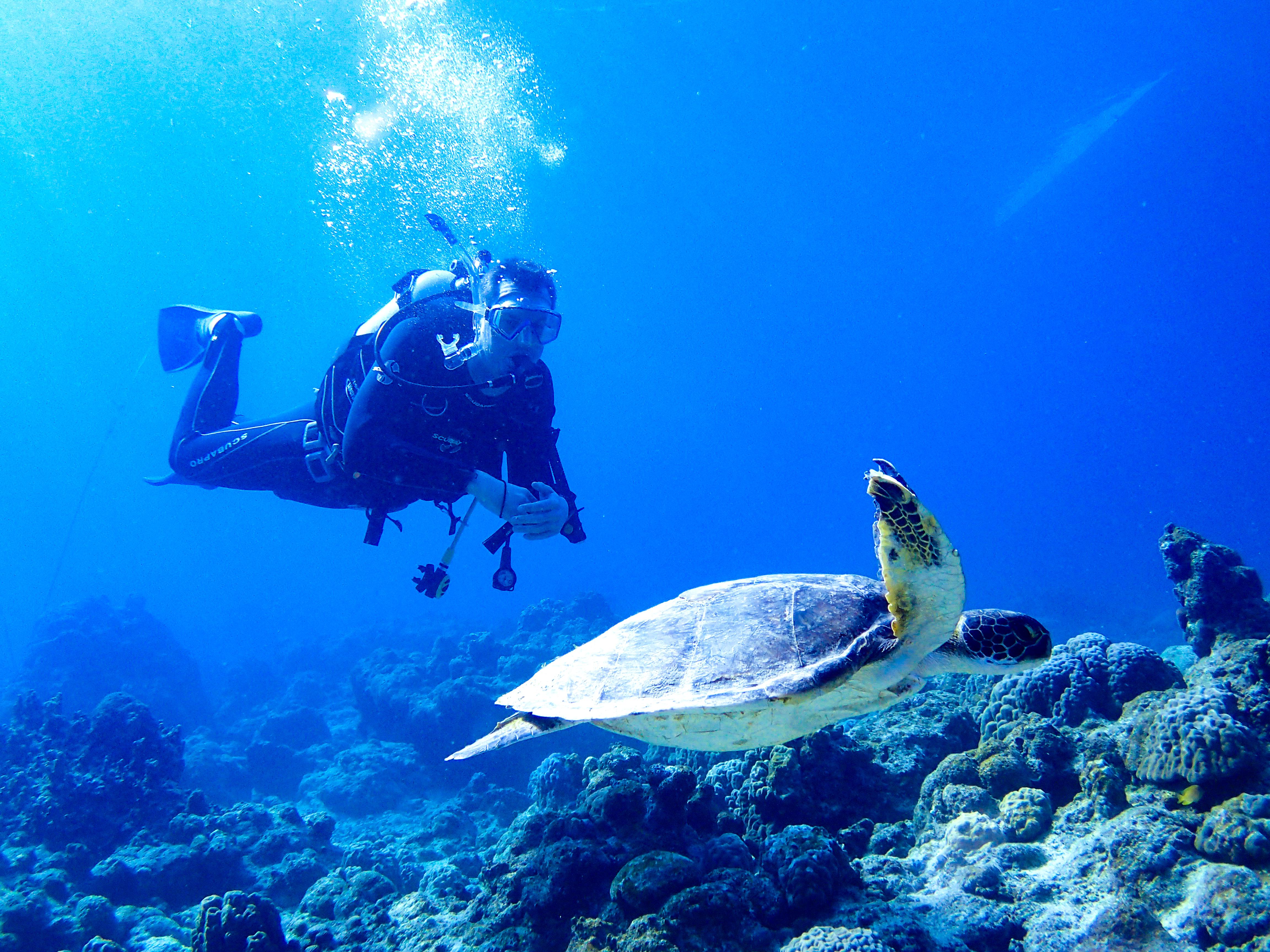 ダイビングをする男性とウミガメ