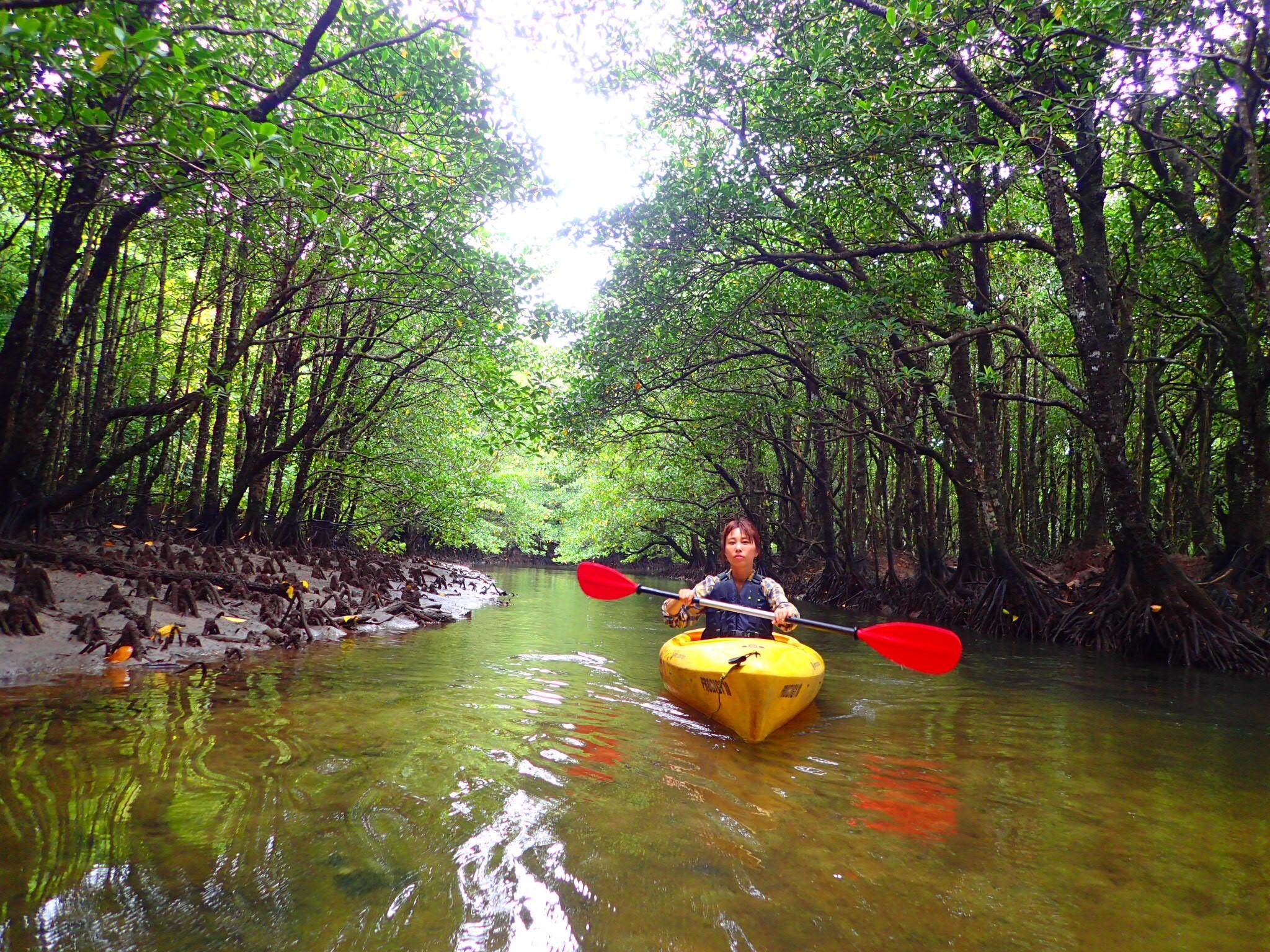 マングローブの中をカヌーで進む女性