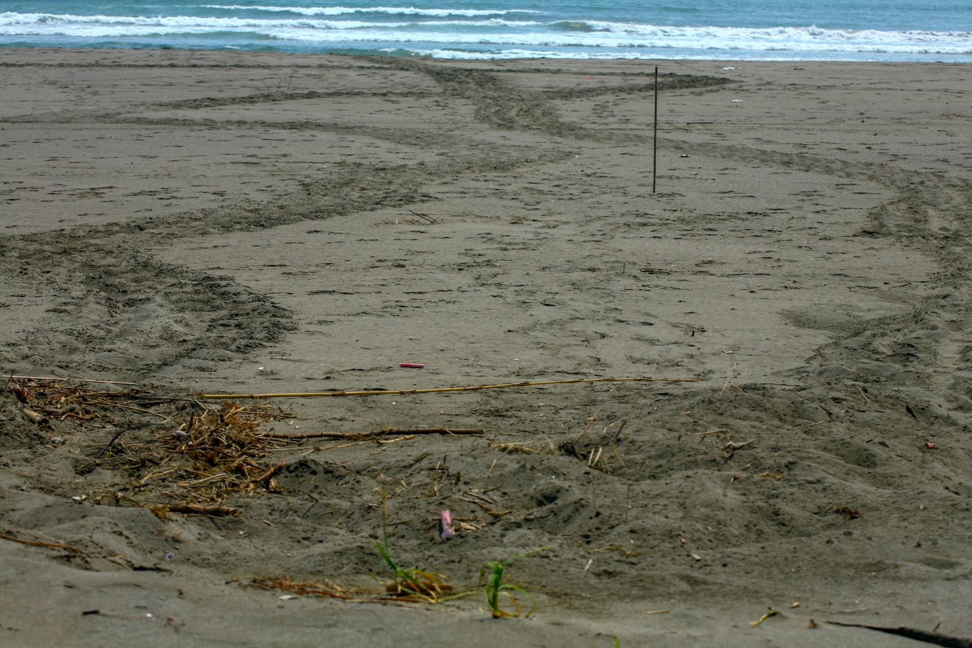 耳切ビーチにあるウミガメ産卵の後