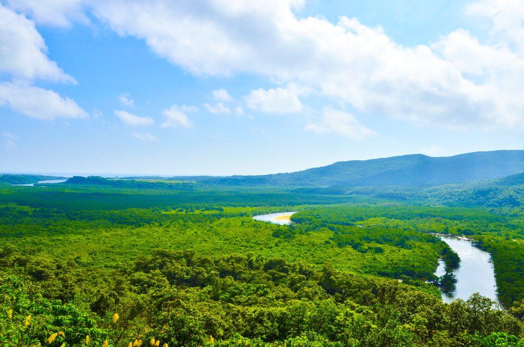 仲間川のマングローブ林
