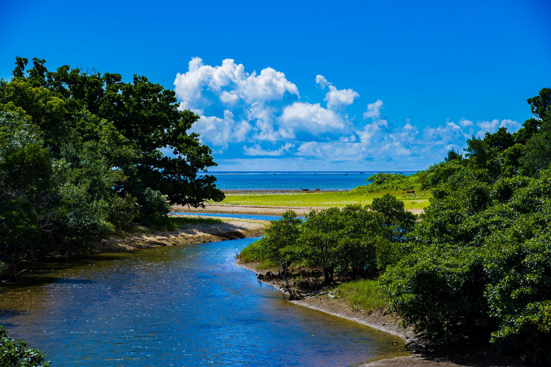 石垣島で一番大きなマングローブ川である宮良川