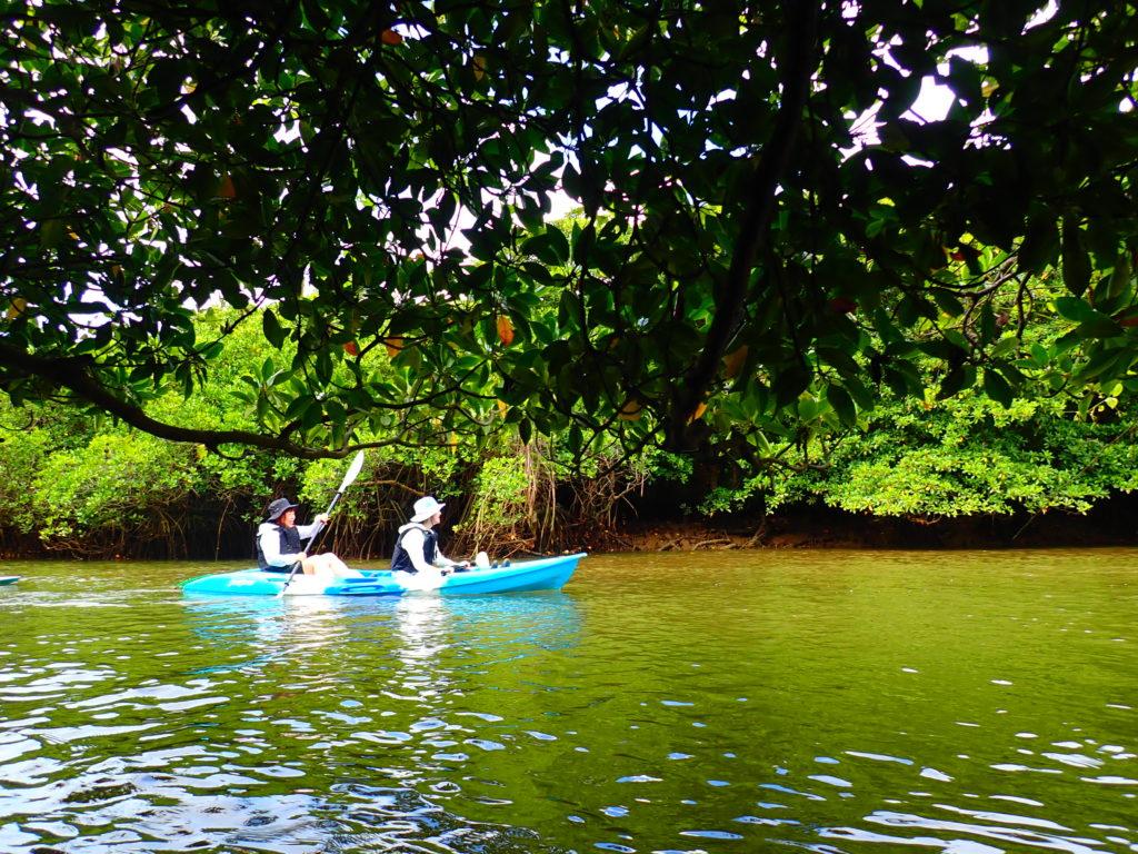 宮良川のマングローブ