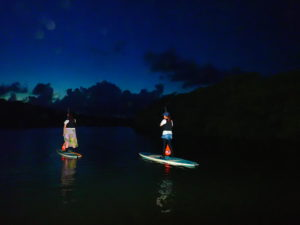 石垣島のマングローブ