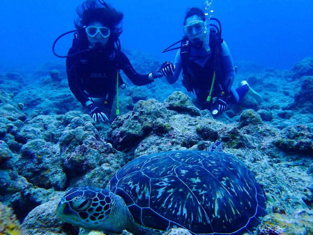 石垣島のウミガメスポットである大崎エリア
