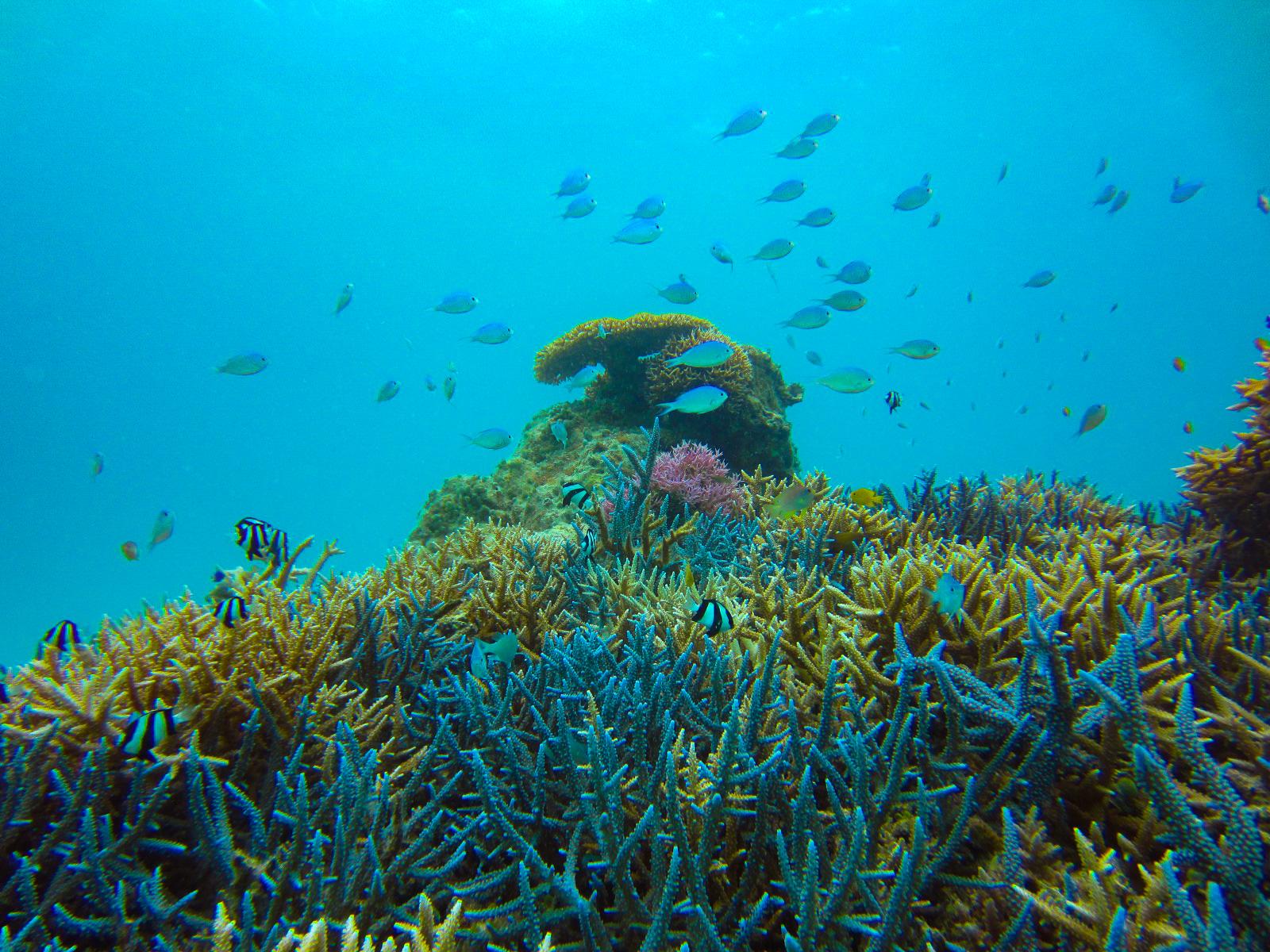 石西礁湖を始めとしたカラフルサンゴ一杯の石垣島の海