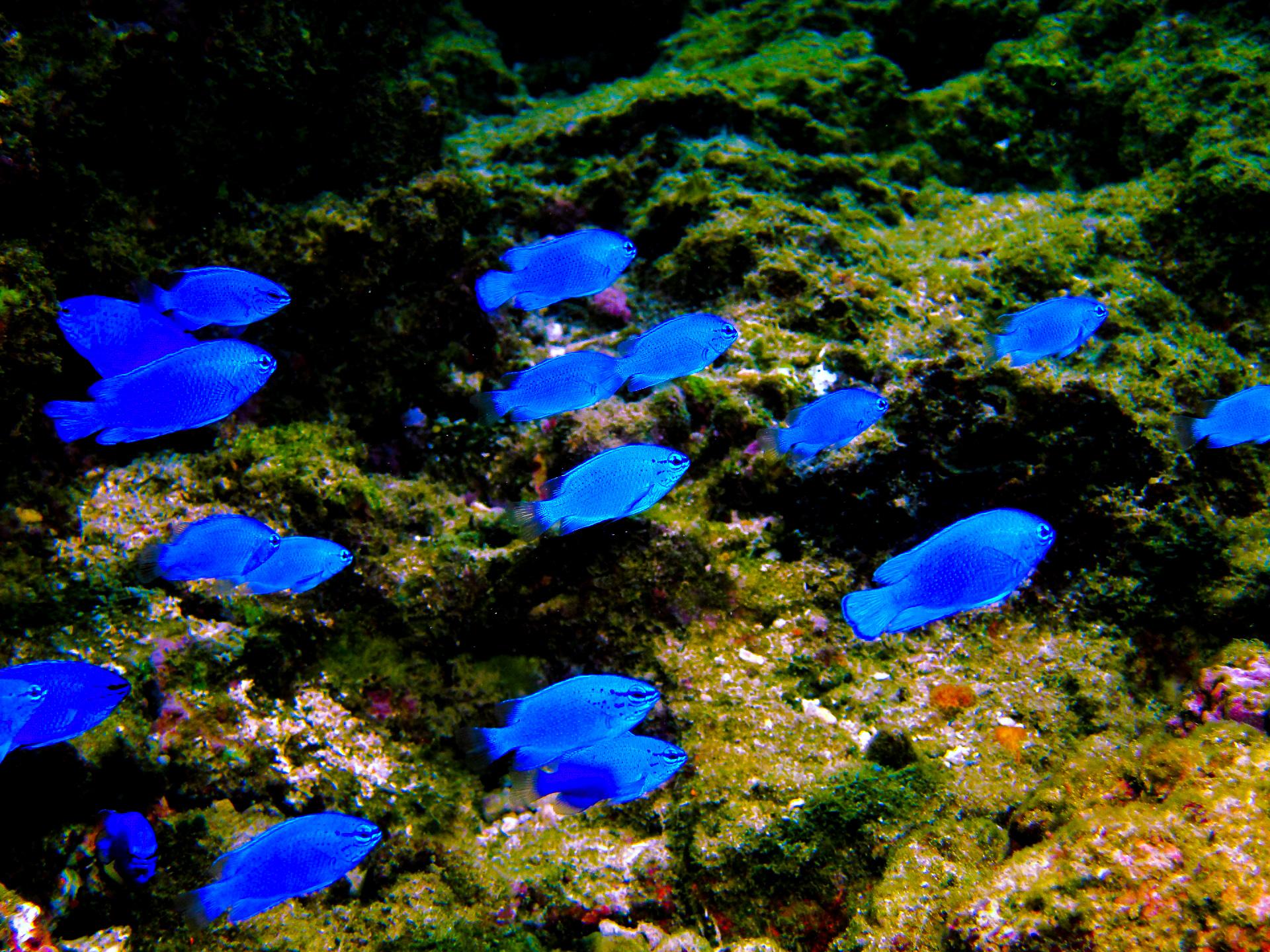 遠浅ビーチに生息するカラフルな熱帯魚