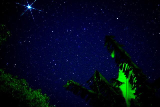 石垣島のジャングルで見る星空