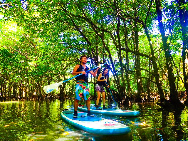 石垣島のマングローブ川を巡るSUPツアー