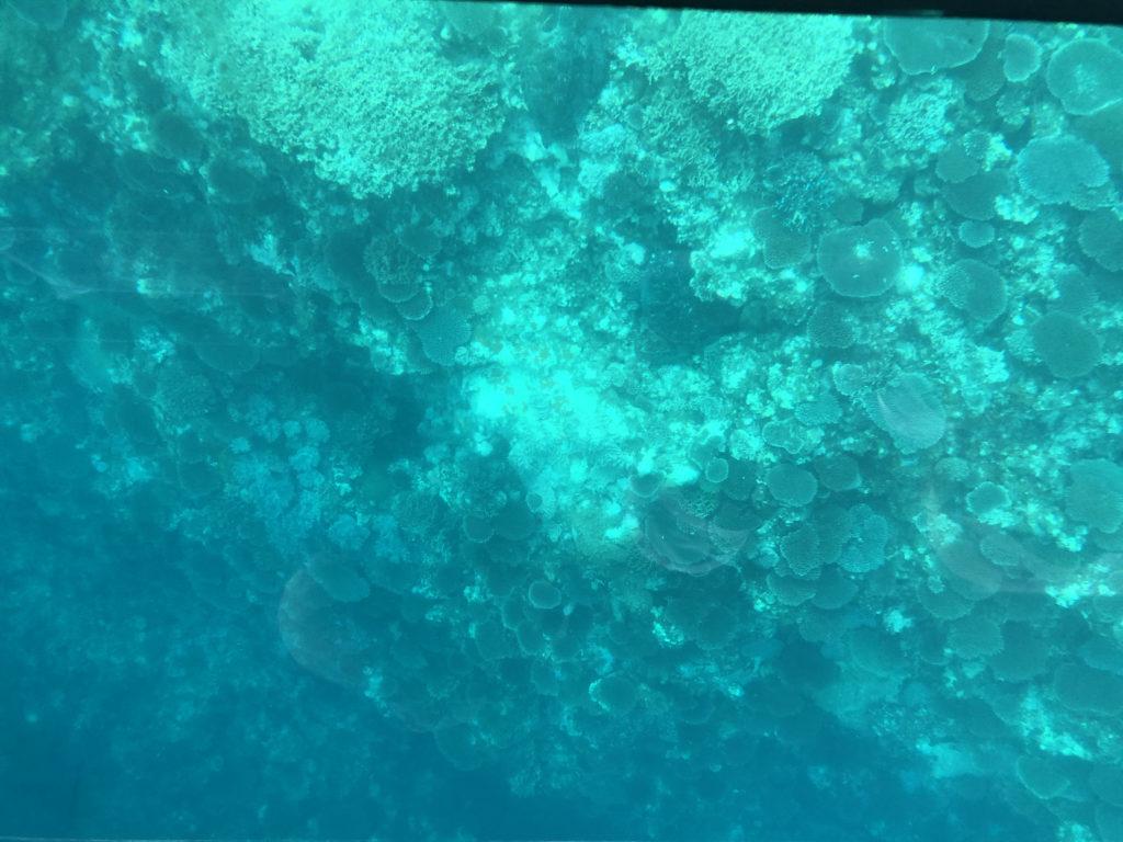 グラスボートから見る川平湾の水中