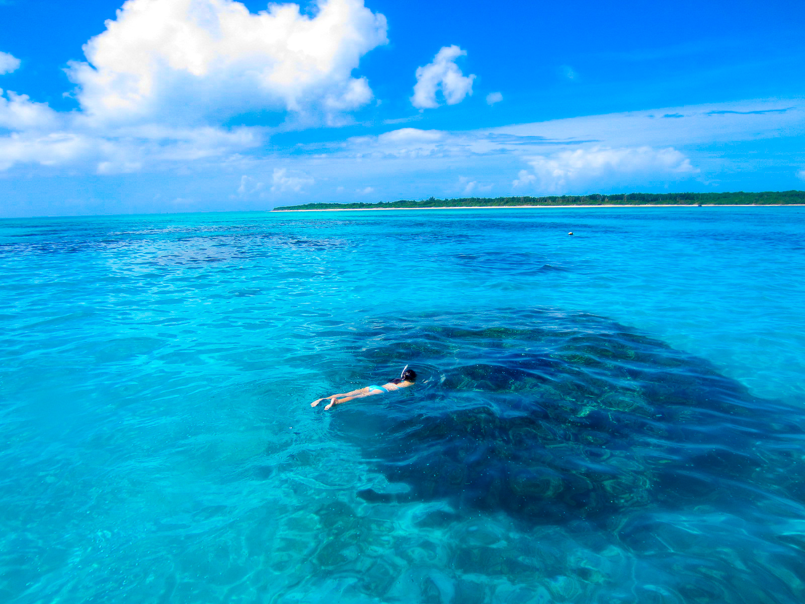 【地域共通クーポン対象】カラフルサンゴ礁・ウミガメに会いに行くシュノーケリング-PMコース-(No.364)