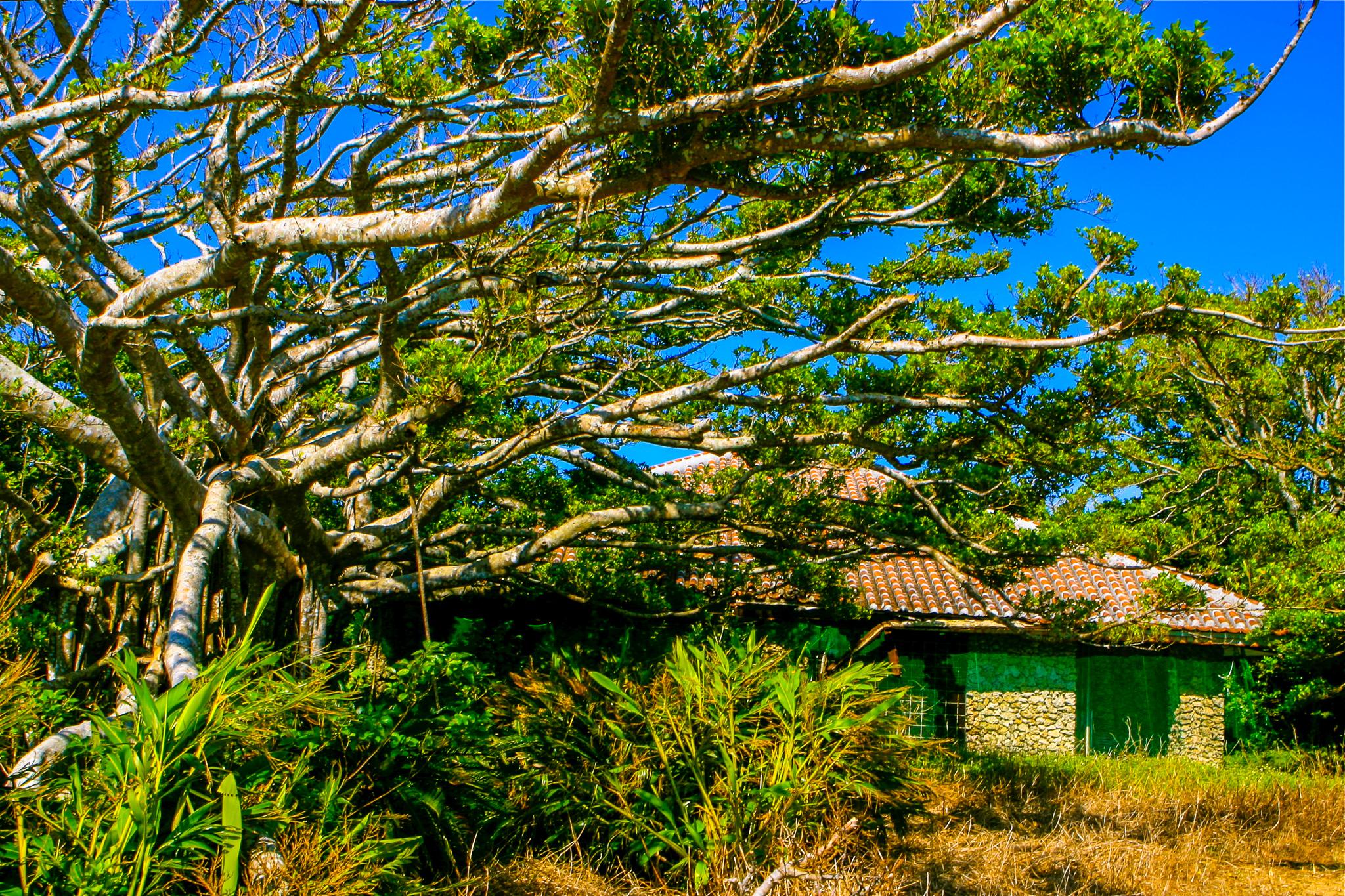 休憩するパナリ島の民家
