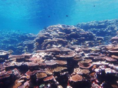 石垣島、青の洞窟シュノーケリング、水中、珊瑚