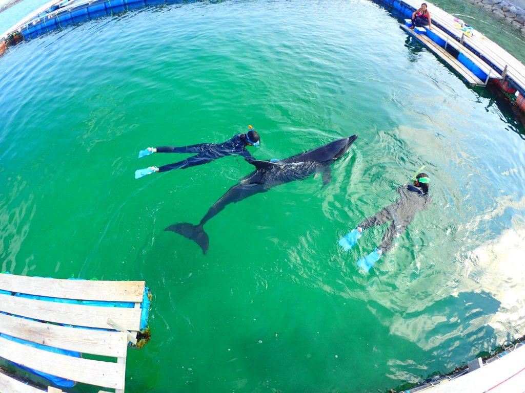 【沖縄・石垣島】イルカと一緒に泳ごう!ドルフィンスイム体験(No.413)